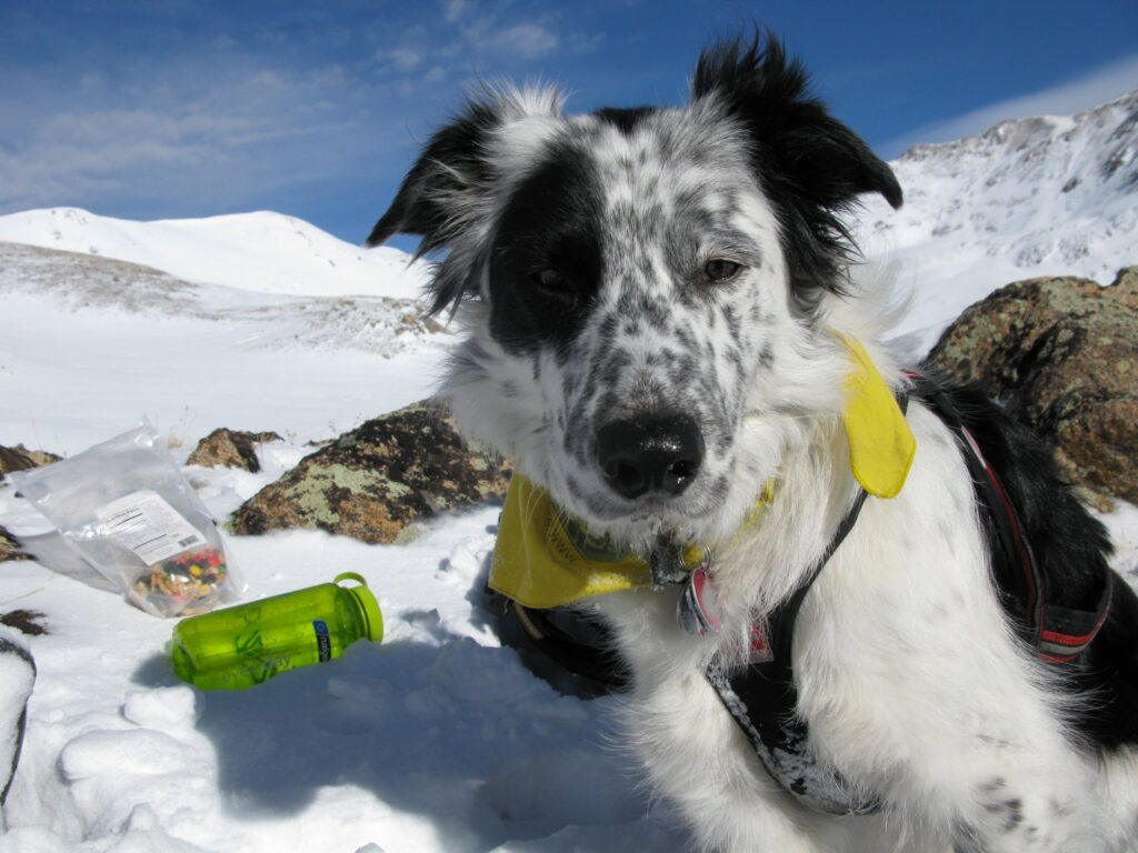 Dog on a snowy mountain for training